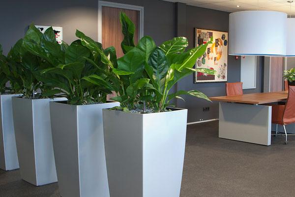 Planten op kantoor voor een zuurstofrijke omgeving