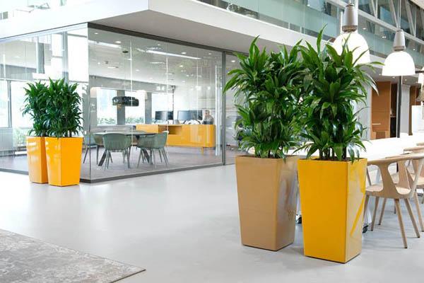 Planten ter decoratie en afscheiding op kantoor