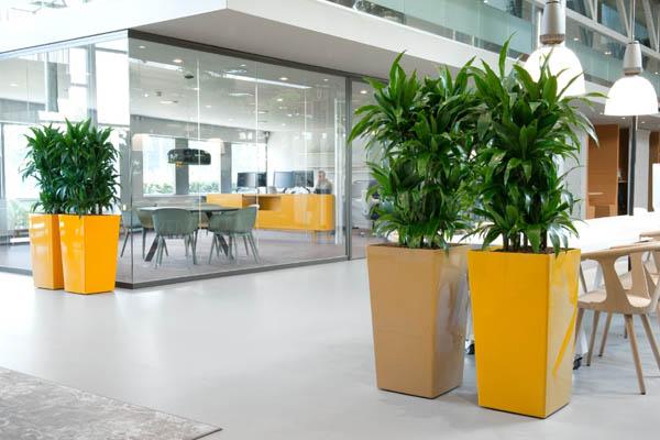 Decoratie met plantenbakken op kantoor